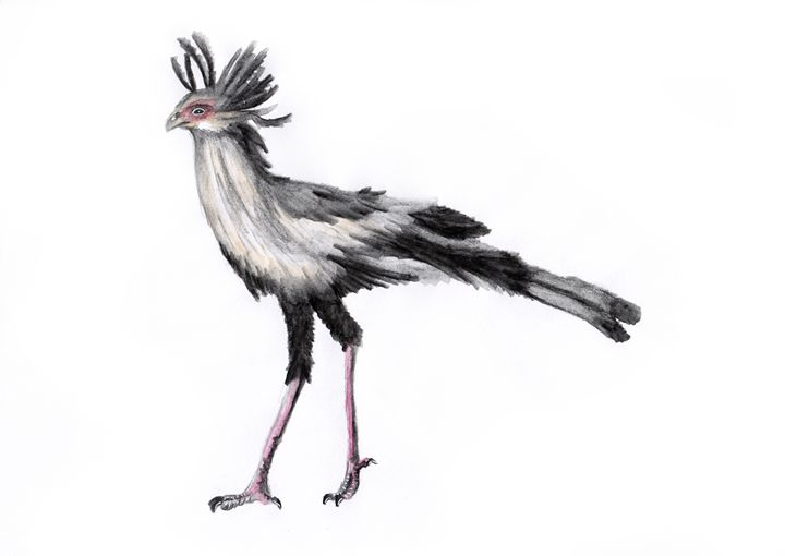 Secretary Bird - Agnieszka Guniek Baradziej