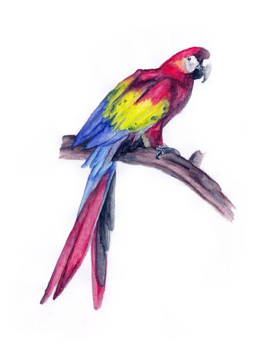 Red Ara Parrot - Agnieszka Guniek Baradziej