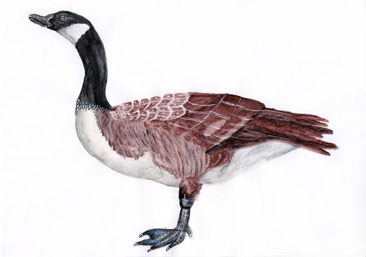 Canadian Goose - Agnieszka Guniek Baradziej