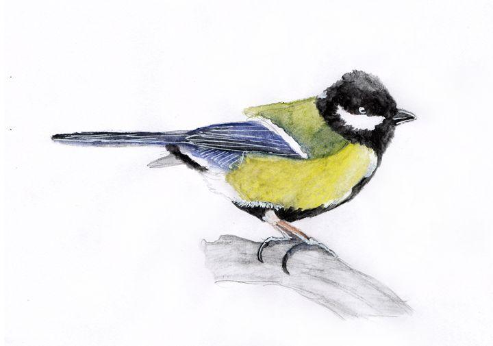 Tit bird - Agnieszka Guniek Baradziej