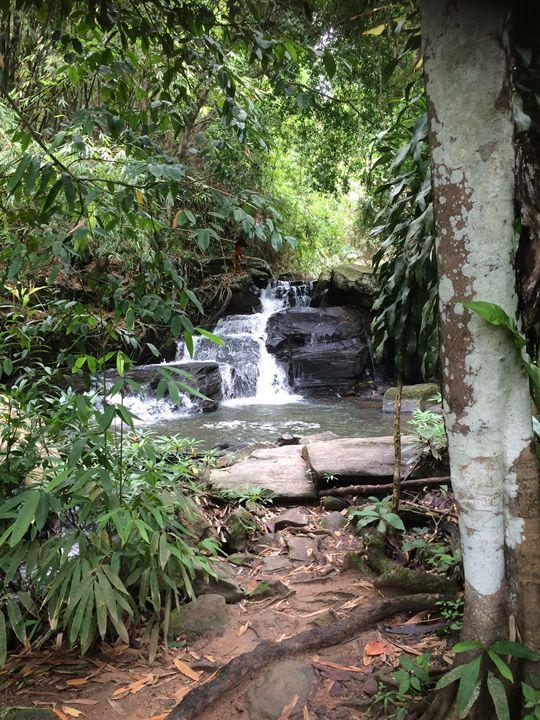 Jungle waterfall - ChristyJCooke
