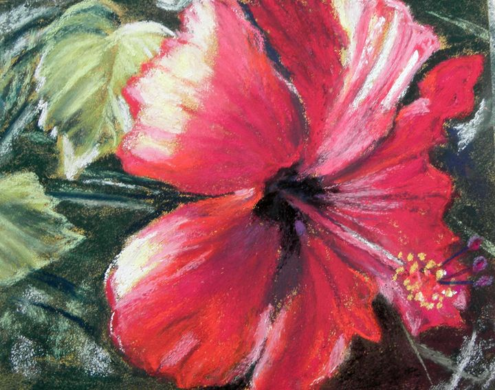 Red Hibiscus - Cathy E Geib Art