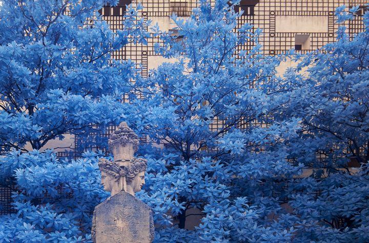 Blue Portrait - Rami photography