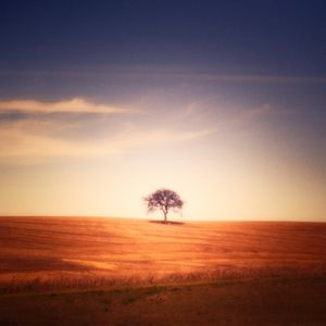 Lovely lonely Tree