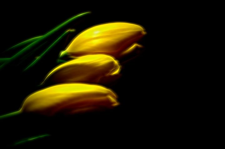 Tulips in the dark - Frozen Face