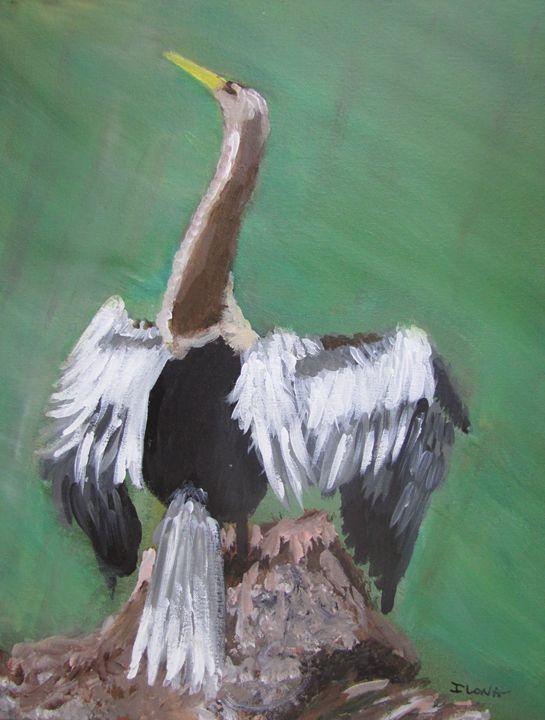 16. Anhinga, Snake Bird - ibenzel