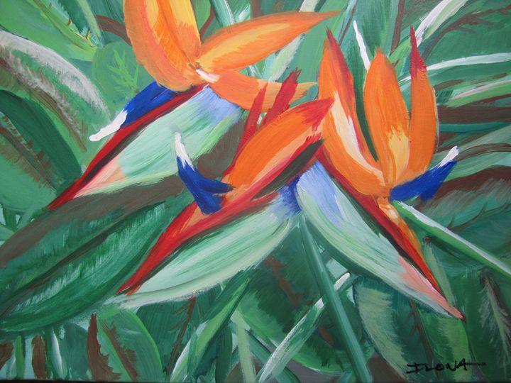 56. Birds of Paradise - ibenzel