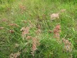 50. Wild Grass