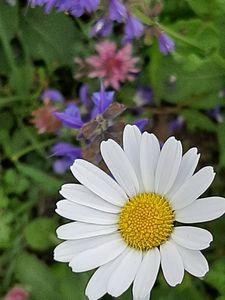 Lonely Daisy - HafnerDekoArt