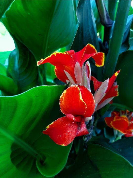 Red Flowers - HafnerDekoArt