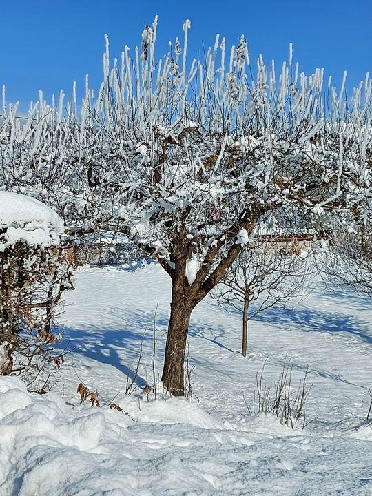 Tree with white veil - HafnerDekoArt
