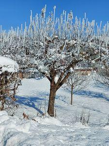 Tree with white veil