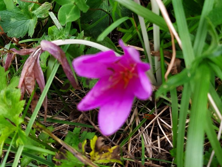 Spring - HafnerDekoArt