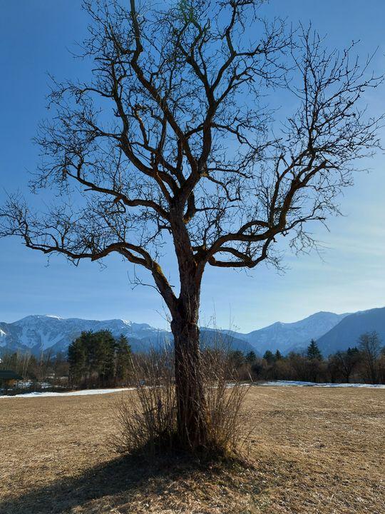Solitary Tree - HafnerDekoArt