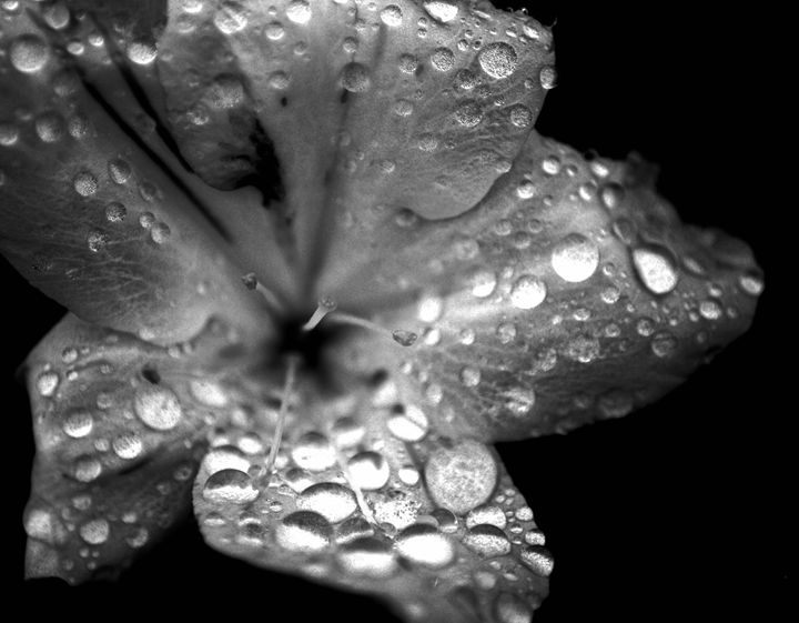 It's The little Things - Apachula Photography