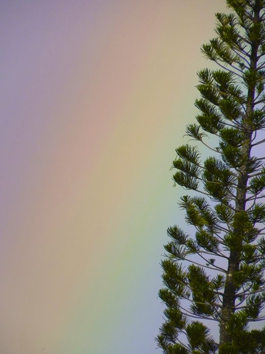 Spectrum - Apachula