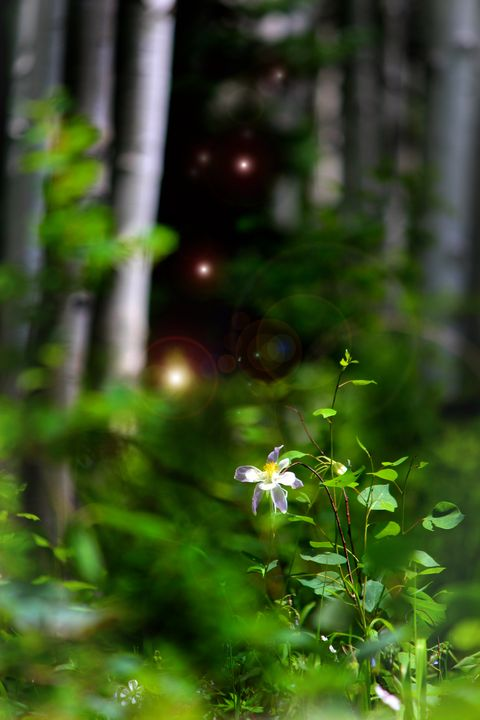 Forest Dreams - Apachula Photography