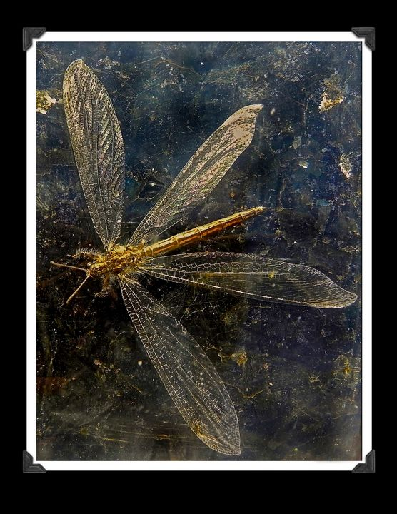 DragonFly - Apachula Photography