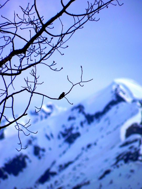 Rocky Mountain Spring - Apachula Photography