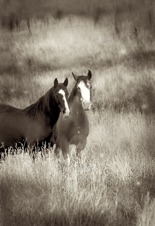 Best Of Friends - Apachula Photography
