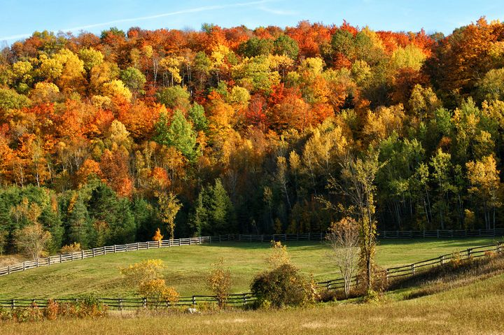 Hockley Valley Fall Glory - Maria Keady at Through the Lens of MTK