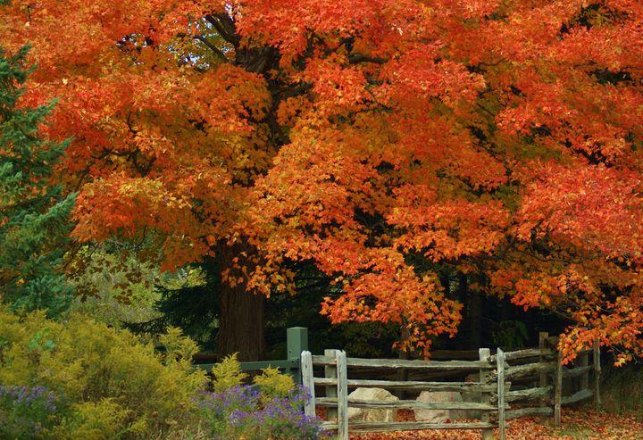 Autumn Glory - Maria Keady at Through the Lens of MTK