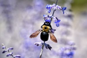 Bee on Flower - Maria Keady at Through the Lens of MTK
