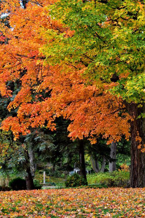 Autumn Canopy - Maria Keady at Through the Lens of MTK