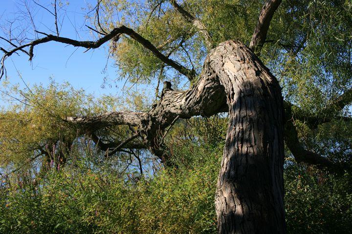 Tree - BSparks