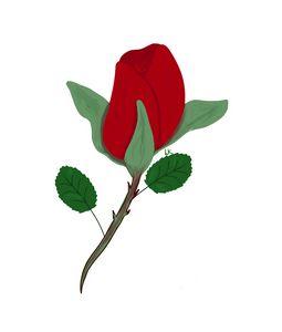 Rosebud Red