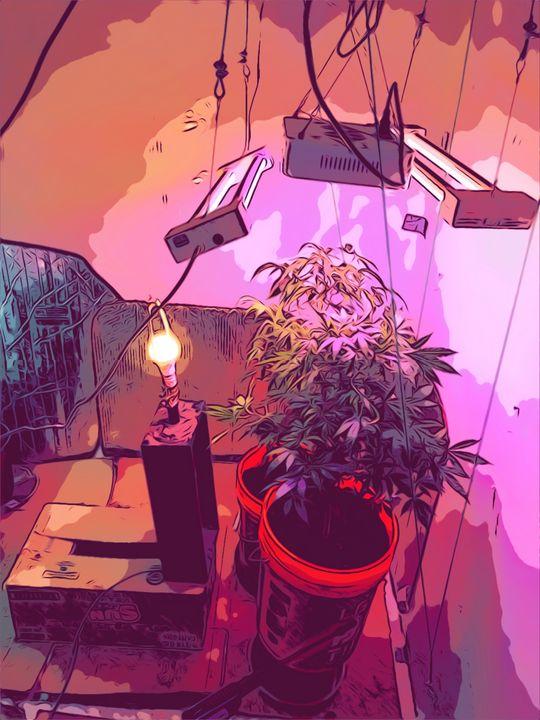 Starting Flower - HazySunday