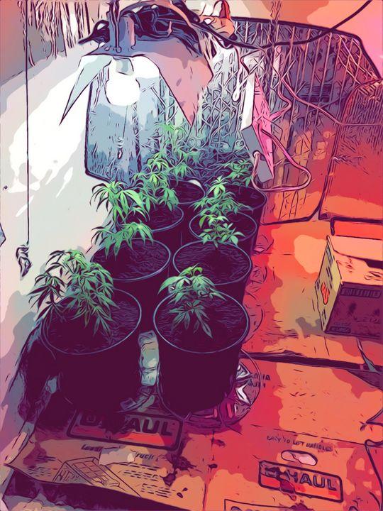 The grow - HazySunday