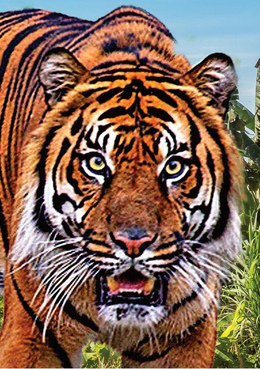 Close Up Tiger Staring Fine Art - Friends Always Giftshop