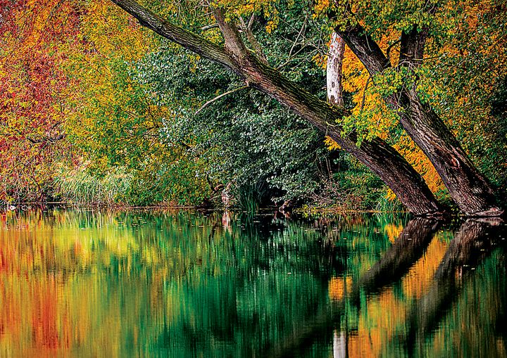 Autumn Scene  Fine Art Print - Friends Always Giftshop