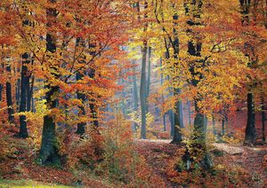 Golden Woods Fine Art Print