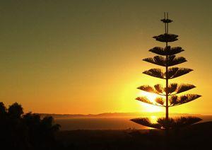 """San Buena Ventura Sunset"""