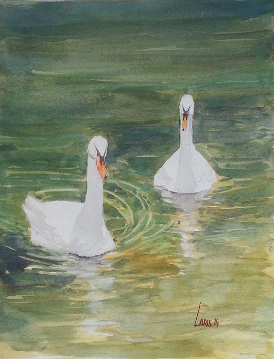 Swans - Laris