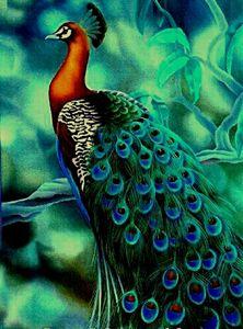 Gray peacock