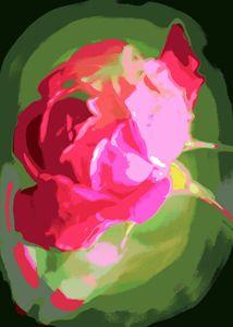 Pink Misty Rose 1