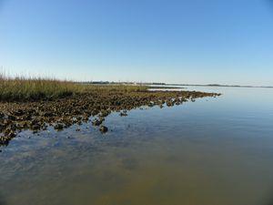Saltwater Flats