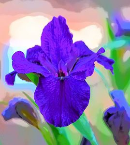 Misty Purple Iris 1