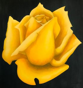 Yellow Rose - SAKO
