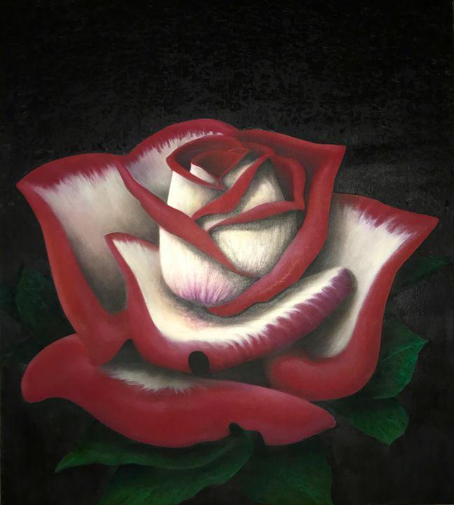 Hybrid Red Rose - SAKO