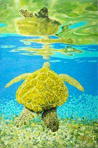 Maui Turtle 2