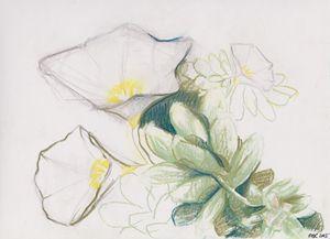 Desert Flower Study 1