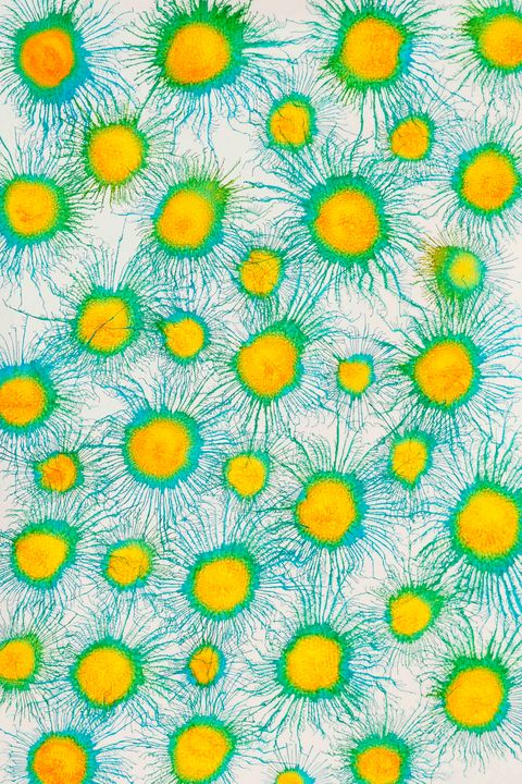 Neoflora Series No. 07 - Art By Sumit Mehndiratta