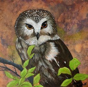 Northern Saw Owl