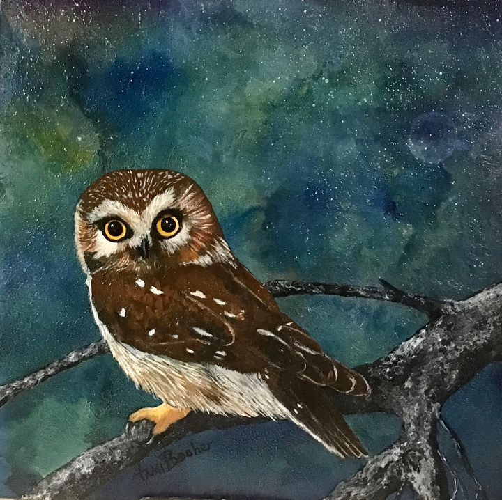 Saw Whet Owl - Tami Booher Appalachian Nature Painter