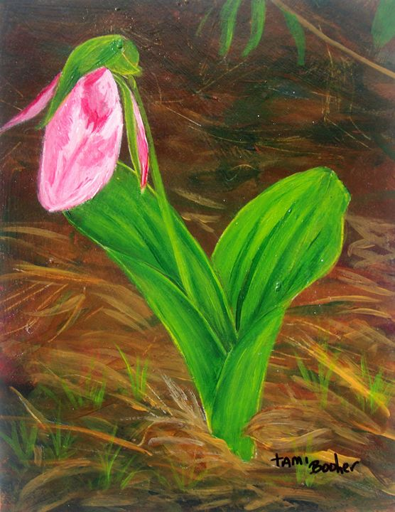 lady slipper - Tami Booher Appalachian Nature Painter