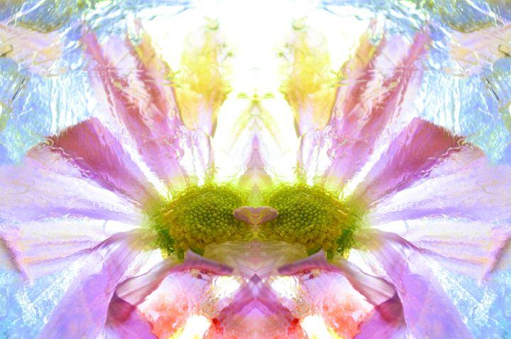 Frozen Flower - Shania Sears
